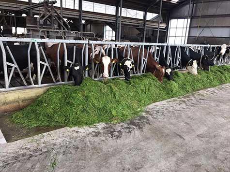 HACCP-Boden für die Fleischverarbeitung